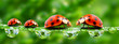 Ladybugs family on a grass bridge. - 29360274