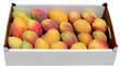caissette de mangues sur fond blanc