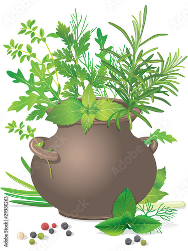 A bouquet of fresh herbs in ceramic pot
