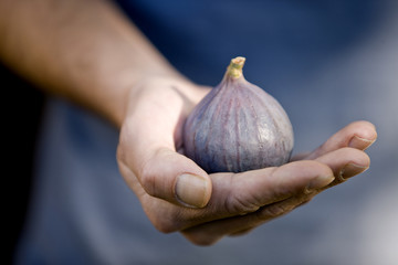 A man holding a fig, close-up