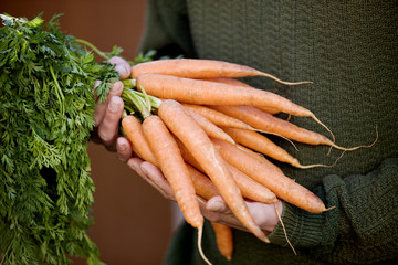 A man holding a bunch of carrots