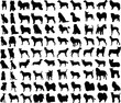 Vector illustration of various dogs silhouettes