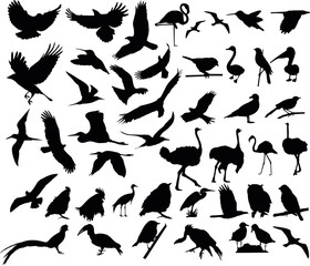 Vector illustration of various birds silhouettes