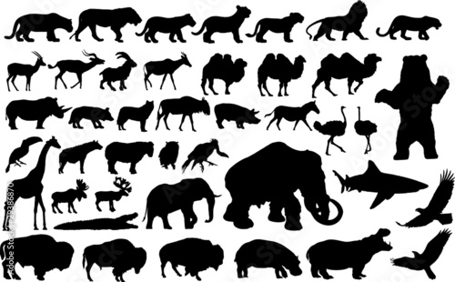 Vector illustration of various animals silhouettes