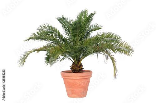 Aluminium Palm boom Phoenix-Palme auf weiß isoliert