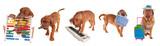 Five Dogue De Bordeaux Puppies and their hobbies/occupations poster