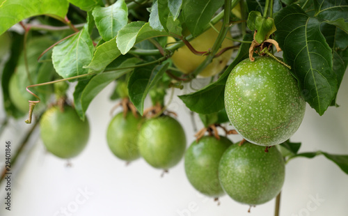 fruits de passiflore grenadille passiflora edulis maracuja de unclesam photo libre de droits. Black Bedroom Furniture Sets. Home Design Ideas