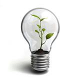 Fototapeta odnawialnych - roślina - Obrazy 3D