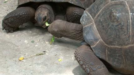 Turtles feeding