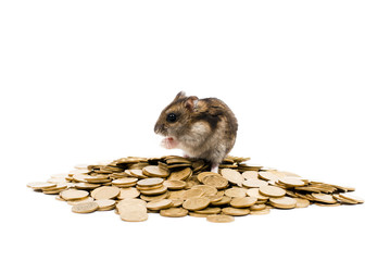 rodent on the coins in profile