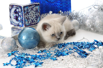 Kitten with New Year's toys and gifts.