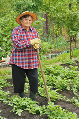 Senior woman gardening - hoeing potatoes