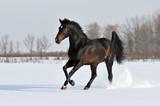bay horse in winter