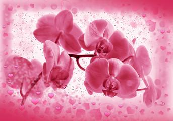Flower  pink orchid in Valentine's frame