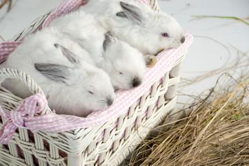 Rabits in a basket