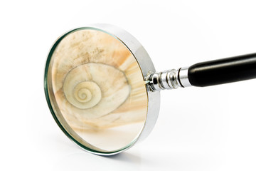 Magnifier in fron of Spiral Shell