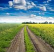 summer landscape ( road along a rape field )