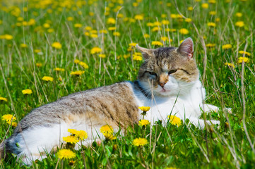 cat in the meadow