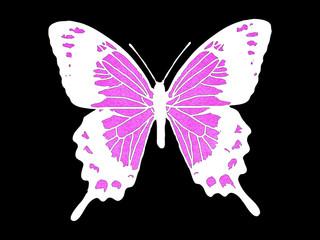 ピンクの蝶
