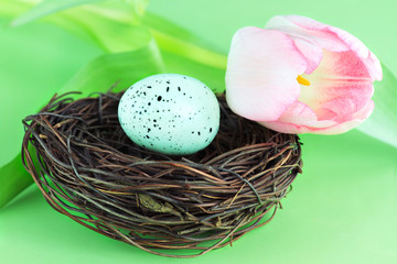 Bird's Nest and Tulip
