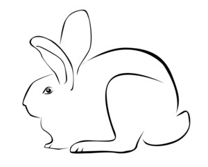 Tracing of rabbit