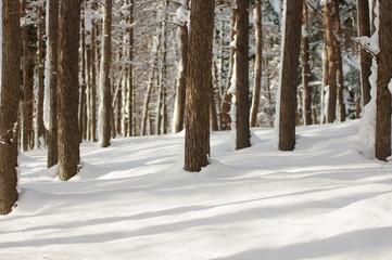 冬の落葉松林