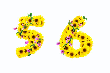 sunflower numbers 5 6 isolated on white background