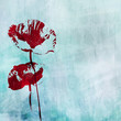 grunge background with poppies