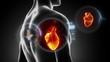 Human heart beating inside chest
