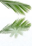 feuille de palmiste