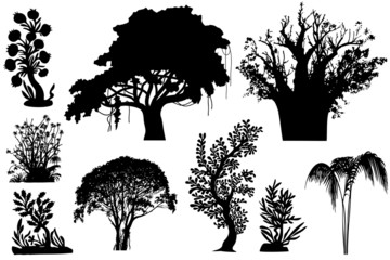 trees of Africa
