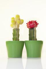 roter und gelber Kaktus