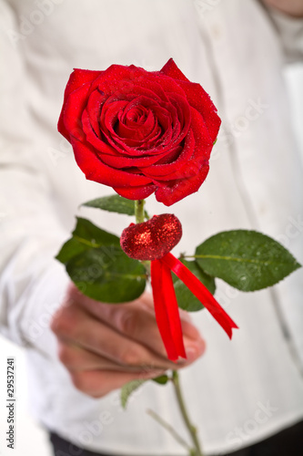Man hand holding one red rose