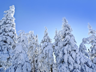 snow covered trees in the mountain