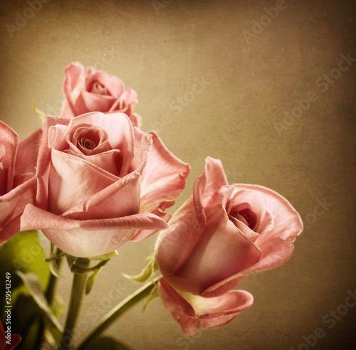 piekne-rozowe-roze-vintage-w-stylu-sepia-toned