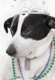 Dog royalty poster