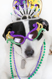 Dog ready for party