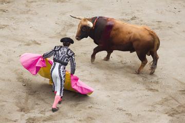 bull and bullfighter