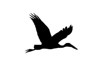 Asian Open Bill Stork