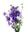 Fresh bouquet of blue and  white bell flowers