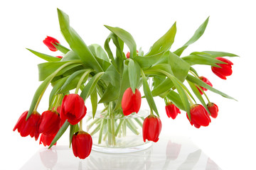 bouquet of red tulips in vase over white background