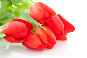 bouquet of red tulips over white background