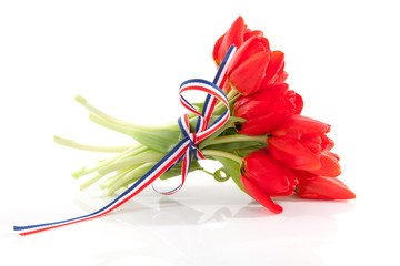 bouquet of red tulips with ribbon over white background