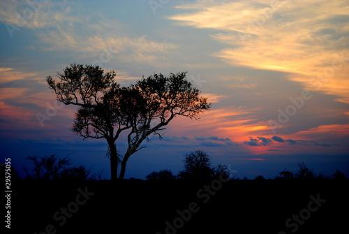 Kruger National Park - zachód słońca