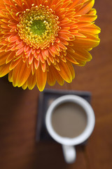 Flor y Cafe