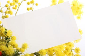 mimosa - biglietto auguri