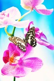 Beautiful butterfly sitting on an orchid flower