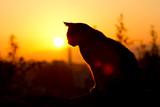 Fototapeta zwierzę - na zewnątrz - Pomarańczowy