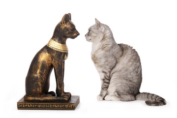 chat regardant une statue de chat égyptien