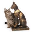 chat effrayé par statuette de chat égyptien